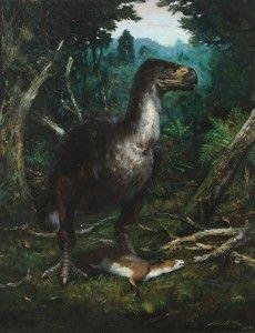 DIATRYMA STEINI Prehistoric World, Prehistoric Animals, Extinct Birds, Angry Birds, Mammals, Oil On Canvas, Wildlife, Horses, Drawings