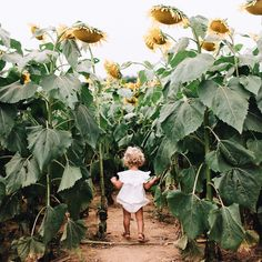 How divine! Such a beautiful picture of Clara Mae in the 'Romance' romper in a field of giant sunflowers. What an amazing location for a photoshoot 💛 Melissa Squires. Toddler Photography, Photography Poses, Family Photography, Outdoor Baby Photography, Sunflower Field Pictures, Sunflower Field Photography, Sunflower Family, Fall Family Photos, Sunflower Fields