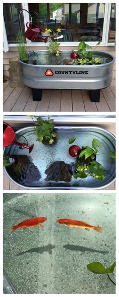 Make pond out of a horse trough. Just add water, pond plants, and fish! Make pond out of a horse trough. Just add water, pond [. Horse Trough, Goldfish Pond, Turtle Pond, Diy Pond, Pond Plants, Water Garden Plants, Growing Plants, Water Pond, Water Trough