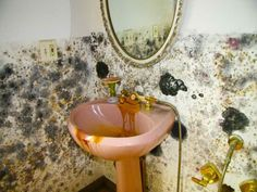 Tips Black Mold Removal in Bathroom