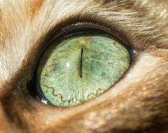 Olhos de gato.