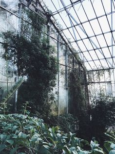 The Glasshouses in Royal Botanic Garden Edinburgh - Katrina Sophia Botanic Gardens Edinburgh, 5 Year Anniversary, Going Away, Greenhouses, Botanical Gardens, Mother Nature, Around The Worlds, Heaven, City