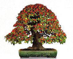 A Perfectly Beautiful Bonsai, Berries and All Bonsai Forest, Bonsai Garden, Bonsai Tree Types, Bonsai Trees, Cotoneaster Bonsai, Ficus Microcarpa, Lantana Camara, Picea Abies, Mame Bonsai