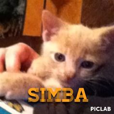 Picture of simba laying on me I edited