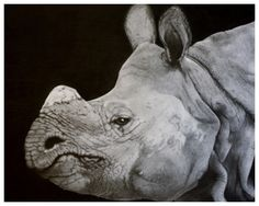 Asian Rhino Graphite on Paper