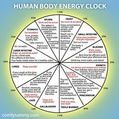 Infographic: Explore Your Human Body Energy Clock It's more of a Chinese medicine than Ayurveda. Ayurveda, Chinese Body Clock, Reiki, Alternative Heilmethoden, Alternative Health Care, Health And Wellness, Health Fitness, Wellness Tips, Fitness Gear