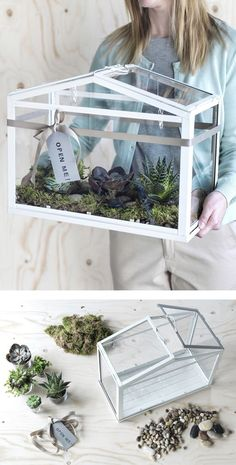A woman carries an IKEA SOCKER greenhouse filled with moss and succulents. A woman carries an IKEA S Terrarium Plants, Succulent Terrarium, Cacti And Succulents, Ikea Terrarium, Terrarium Ideas, Diy Greenhouse Plans, Backyard Greenhouse, Diy Mini Greenhouse, Simple Greenhouse