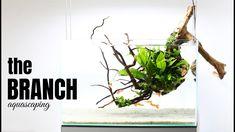 Betta Aquarium, Planted Aquarium, Fish Tank Garden, Fish Aquarium Decorations, Betta Tank, Nano Tank, Aquarium Design, Aquascaping, Plant Hanger
