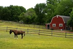 Managing Small Horse Pastures - TheHorse.com | Proper management of pastures on small acreage can mean better grazing for your horses and reduced hay costs. #horses #pasturemanagement #TheHorse