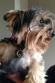 South Hill designs lockets for our beloved pets too!! http://www.southhilldesigns.com/wendatop