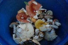 How to Grow Mushrooms with No Kit