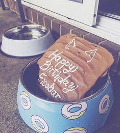 Birthday, dog, food bowl