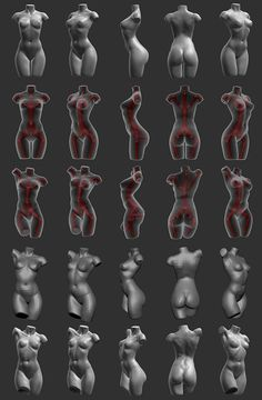 Another ZBrush reference for female human torsos with some emphasis on using Zspheres.