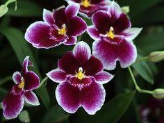 """Résultat de recherche d'images pour """"orchidees"""""""