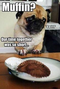 If the Shoe Fits. - Page 15 of 18 - Pug Meme, funny cute pugs Funny Animal Pictures, Dog Pictures, Funny Animals, Cute Animals, Funny Photos, Pug Photos, Animal Pics, Pug Meme, Funny Pugs