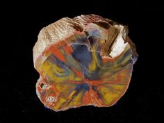 Rainbow Petrified Wood This colorful piece of Triassic age petrified wood comes from northern Arizona. Huge logs of similarly colorful fossil wood are found lying on the desert surface in the world-famous Petrified Forest National Park. Cool Rocks, Beautiful Rocks, Minerals And Gemstones, Rocks And Minerals, Petrified Wood, Fossilized Wood, Rock Collection, Mineral Stone, Rocks And Gems