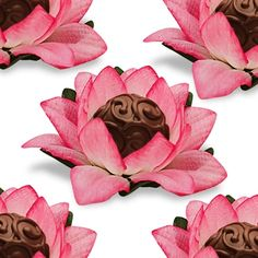 Lotus for chocolates