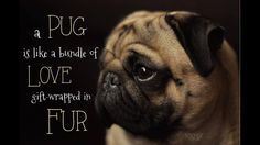 No truer words have been spoken!! #pug