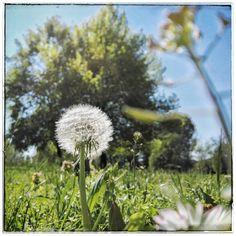 Lieve #lieve #campestre #outdooroffice  #outdoor #lunchbreak #sunny #sunnydays #milano #fotoitaliane #igers #igersitalia #igersmilano #ig #ig_italia #institalia #domenicomirigliano #mobilephotography :)