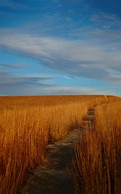Hike Kansas A hiking trail at Konza Prairie, the first stretch, arguably the hardest since it's all up-hill from here. Champs, Kansas Usa, Kansas City, Flint Hills, Fields Of Gold, Wisconsin, Michigan, Le Far West, Fauna