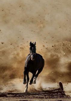 Her şey halkadır. Her birimiz kendi hareketlerimizden sorumluyuz. Hepsi döner dolaşır, bize geri gelir. #horsehour