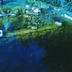 Álomkuckó: garden pond