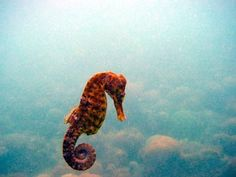 seahorses remind me of the little mermaid.