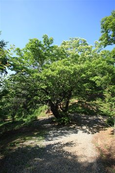 ソンファンダン(思い出の場所) - WolMyeongDong(キリスト教福音宣教会)