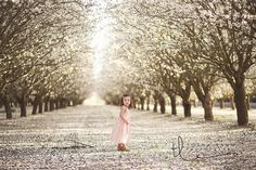 little girl orchard session loomis Sacramento Photographers, Almond Blossom, Style Guides, Minis, Pictures, Photography, Beautiful, Photos, Photograph