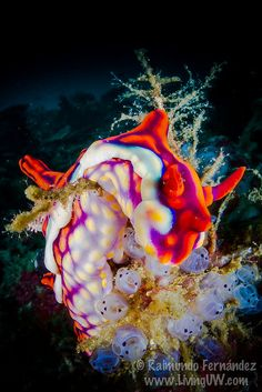 colorful nudibranch--don't know if they qualify as animals but I'm saying yes. ha ha