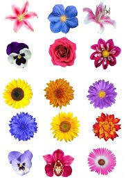 Other Cake Decorations & Cake Toppers Wafer Paper Cake, Paper Cupcake, Rice Paper, Summer Flowers, Cupcake Toppers, Cake Decorating, Cards, Beautiful, Card Ideas