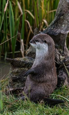 Otter has a very cute way of sitting - September 12, 2015