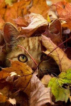"Kitty-Cat: ""See... Tigers of the wild are not the only 'Cats' that know how to use camouflage! Please do not sabotage my hiding place, or trespass on my hunting case!"" (Written By: © Lynn Chateau.)"