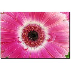 Stretched and ready to hang, this pink Gerber daisy canvas photograph is stunning. This floral art piece is vibrant and life-like with its varying shades of pink. It would be great hung in an office, bathroom, kitchen, or girls bedroom.
