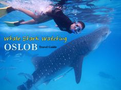 Whale shark watching tours in Oslob, Cebu looks more like a zoo than an authentic nature exhibition. This travel guide has everything you need to know. Shark Watches, Jeepney, Cebu City, Whale Watching, Day Tours, Outdoor Pool, Snorkeling, Time Travel, Travel Guides