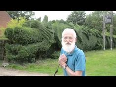 Retired man sculpts hedge into a 100-foot-long dragon