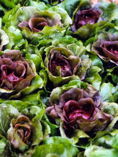 Ottolenghi's Perfect Lettuce Salad With Radicchio, Radishes, Tomatoes ...