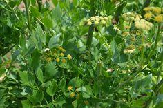 11 léčivých bylin, které by neměly chybět na žádné zahradě či na balkóně