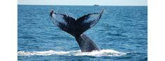 Granite State Whale Watch - Rye New Hampshire - NH Seacoast