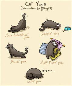 Cat Yoga #ABeginnersGuideToSalad #FunYogaPics #CatsDoingYoga
