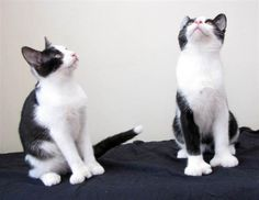 Polydactyl Cats: The Charm of Big Feet | Mental Floss