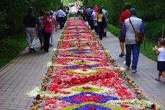 Podziwianie świątecznego dywanu z kwiatów: Spycimierz