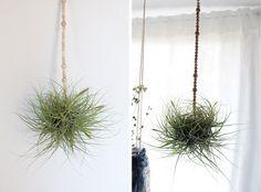DIY Boules de bois, plante et suspension  | Deer Jane