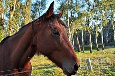 PLEASE TALK TO ME #Horse #Photography Quality Prints and Cards at:  http://kaye-menner.artistwebsites.com/featured/please-talk-to-me-kaye-menner.html  -