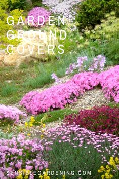 Ground covers with Sensible Gardening