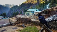 The Bird Watching | 12 Reasons Nepal Should Go On Your Vacation Bucket List