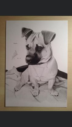 Drawing Commissions, My Etsy Shop, Drawings, Dogs, Artist, Artwork, Animals, Work Of Art, Animales