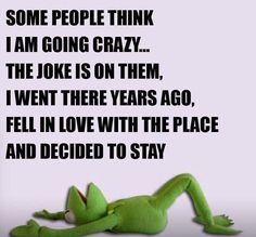 Some People Think I'm Going Crazy.The Joke Is On Them funny lol funny quotes humor funny pictures funny pics funny images really funny pictures funny pictures and images Funny Kermit Memes, Wtf Funny, Funny Shit, E Cards, Sarcastic Quotes, Funny Quotes, Madea Quotes, Just For Laughs, Just For You