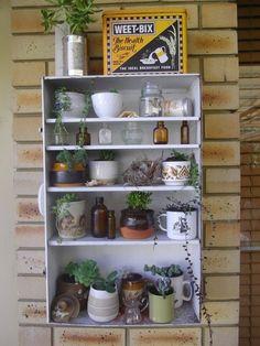 Plantas no interior - Indoor plants