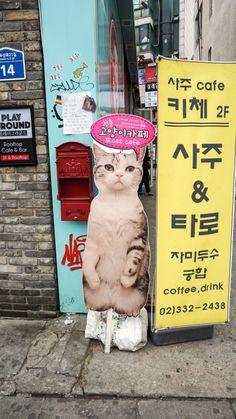 Cat Cafe in Seoul Cafe Me, Cat Cafe, Coffee Drinks, South Korea, Seoul, Korea Cafe, Kitty, Tours, World